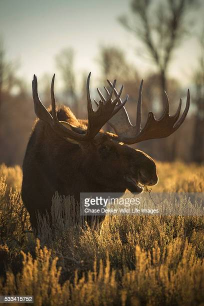 Deer Hoof Print Stock Photos And Pictures