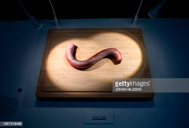 A bull penis is displayed at the Disgusting Food Museum in Malmo Sweden on November 4 2018 Disgusting Food Museum invites visitors to explore the...