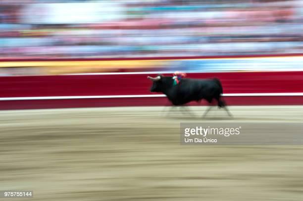 bull - um animal stockfoto's en -beelden