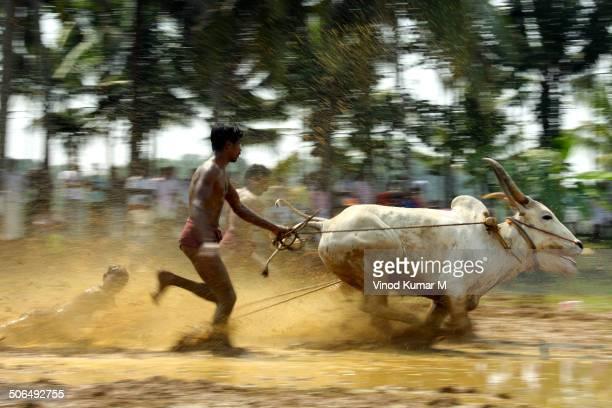 Bull Race at Kakkoor Kalavayal, Kerala, India.