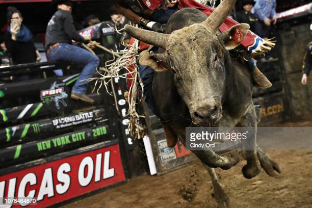 Bull rider Alisson De Souza rides Short Pop during the 2019 Professional Bull Riders Monster Energy Buck Off at the Garden Unleash the Beast event at...