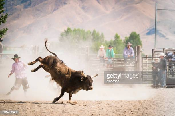 Bull Rider At A Small Town Rodeo