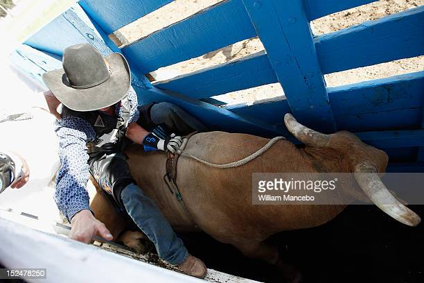 Bull rider Dakota Beck in the chute just before riding G Force at the Pendleton Roundup on September 13 2012 in Pendleton Oregon