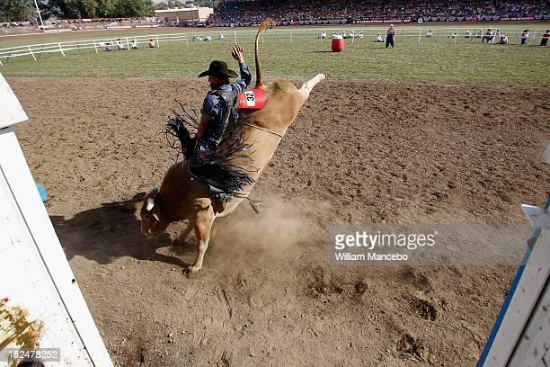 Bull rider Dakota Beck rides G Force at the Pendleton Roundup on September 13 2012 in Pendleton Oregon