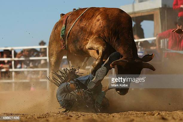 A bull rider falls under the bull after he was bucked off during the Bull Ride Spectacular on the second day of the 2014 Deni Ute Muster at the Play...