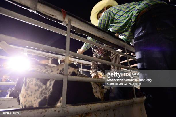 Bull rider gets set to ride during the bull riding competition, Sunday, Aug. 4 at the Boulder County Fair in Longmont. The CPRA rodeo featured nine...