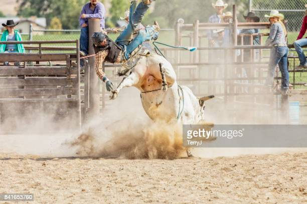 bull rider is thrown from a bull during rodeo competition - bull riding stock pictures, royalty-free photos & images