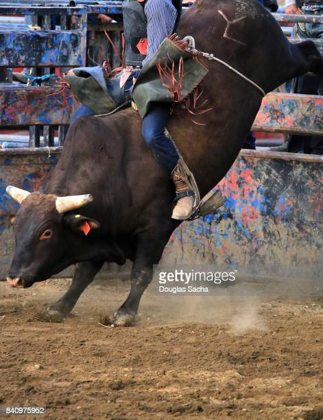 Bull Rider on an bucking Bull