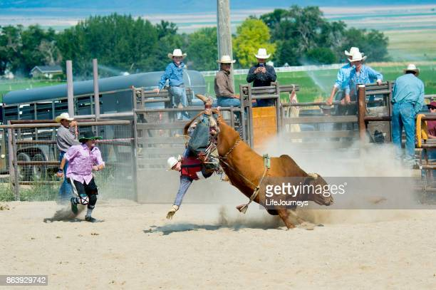 bull rider trying hard for that 8 second bull ride - bull riding stock pictures, royalty-free photos & images
