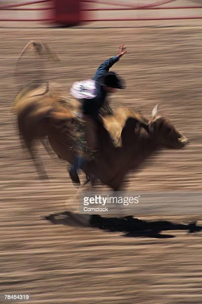 Bull riding in rodeo Cheyenne, Wyoming