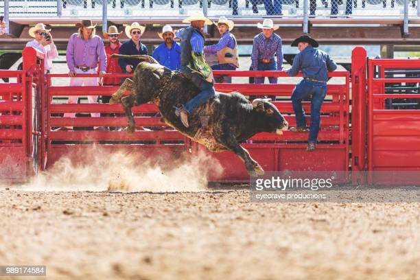 bull riding utah cowboys western outdoors and rodeo stampede roundup riding horses herding livestock istock photoshoot - bull riding stock pictures, royalty-free photos & images