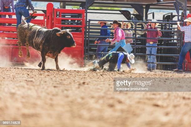 bull riding utah cowboys western im freien und rodeo stampede roundup reiten pferde hüten vieh istock foto-shooting - istock stock-fotos und bilder