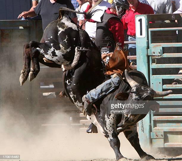 Bull Riding-3