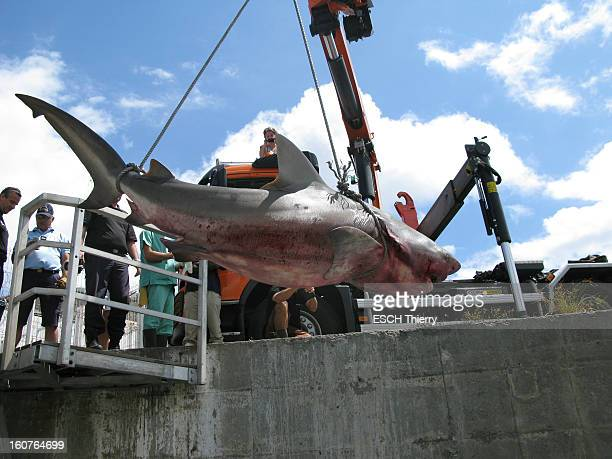 Bull Shark is caught on August 10, 2012 in Reunion Island. Fabien Bujon was attacked and seriously injured by a bull shark on the island of La...