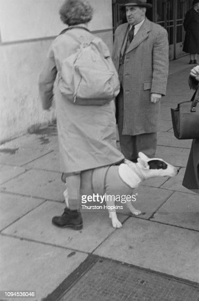 Bull Terrier and its owner outside the Grand Hall, Olympia, during Crufts dog show, London, 8th-9th February 1952. Original Publication: Picture Post...