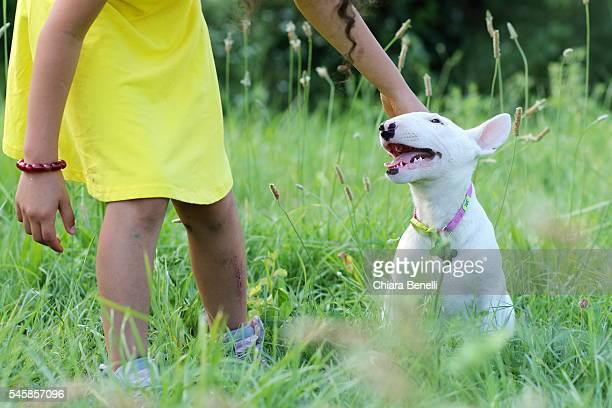 bull terrier puppy and little girl - bull terrier stock photos and pictures