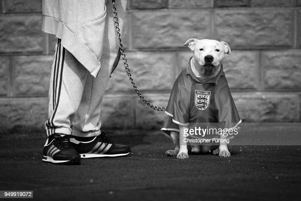 A bull terrier wears an England football shirt as people take part in the annual Stone Cross St George's Day Parade on April 22 2018 in West Bromwich...