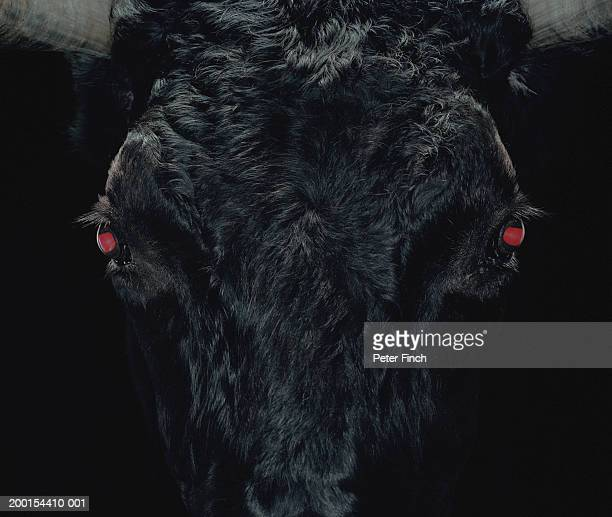 Bull with red eyes, close-up (Digital Enhancement)