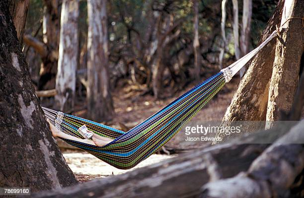 A woman sleeps in a hammock whilst Easter camping along a bush river.