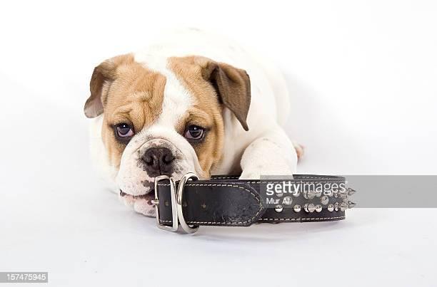 Bulldog et col