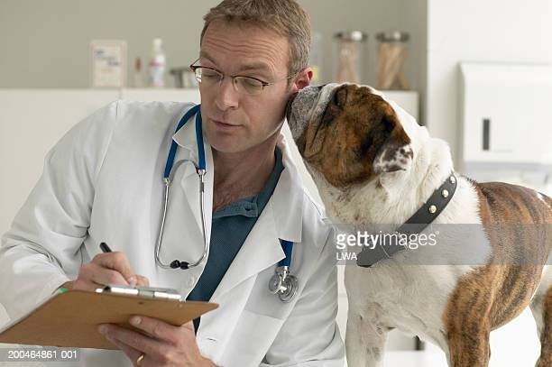bulldog nuzzling veterinarian writing on pad - dog pad foto e immagini stock