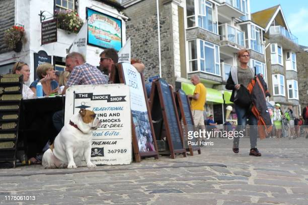 Bulldog sits outside the Sloop in founded in 1312 St Ives during the 2019 September Summer Festival St Ives has become renowned for its number of...