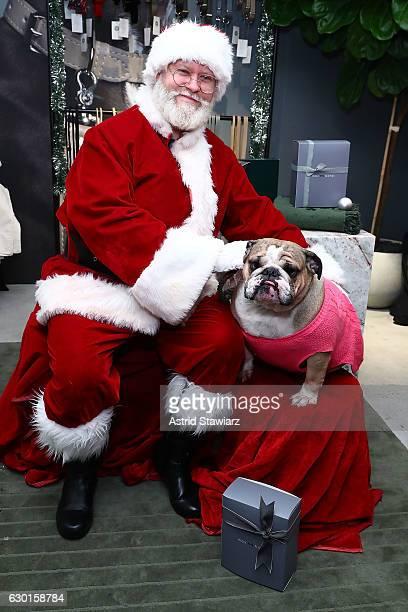 Bulldog Tonka poses for photos with Santa at the MaxBone Santa Event NYC on December 17 2016 in New York City