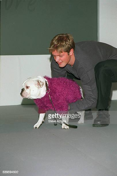 Bulldog wearing a pullover in trendy color