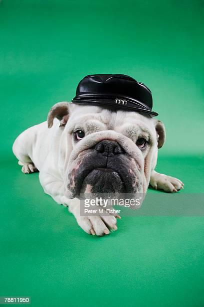 Bulldog Wearing Biker Cap