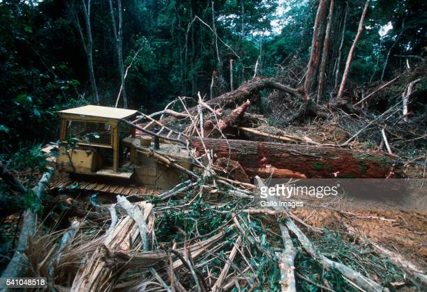 Bulldozer Clears Trees and Vegetation