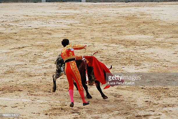 bullfighter holding red cape with bull - bullfight stock pictures, royalty-free photos & images