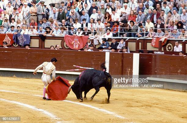 Bullfighter in action using the muleta bullfighting scene Madrid Spain