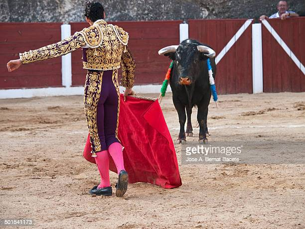 Bullfighter of backs in a bullring, with the cape in the hands in front of a bull.Bocairent, , Spain.