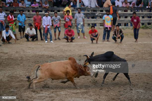 Bullfighting at the bullfighting arena in Nakhon Si Thammarat Province Thailand on January 20 2018 Bullfighting is a popular past time in southern...