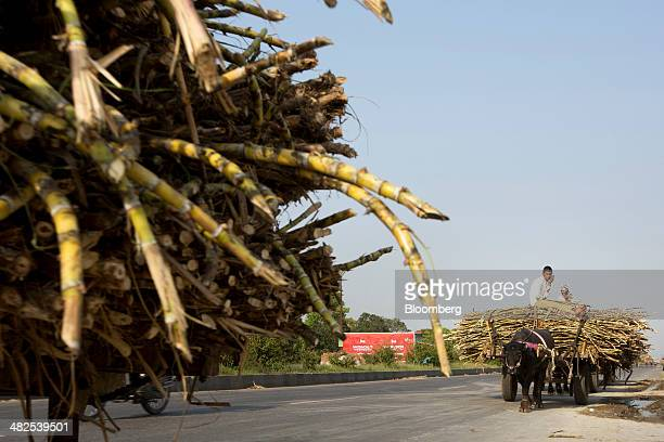A bullock hauls a cart laden with sugarcane to the Simbhaoli Sugars Ltd mill in the district of Hapur Uttar Pradesh India on Wednesday April 2 2014...