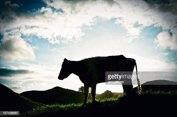 Bullock in Silhouette