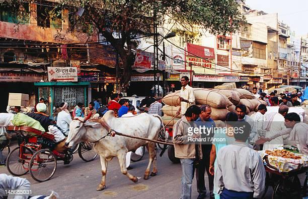 Bullock-drawn cart on Chandni Chowk, Old Delhi.