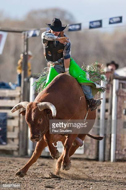 Bull-o-Rama Rodeo at Big Timber in Montana