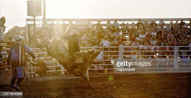 a bullrider competing in a bull riding event while riding on a bucking bull's back while the rodeo clown in a stadium full of people at sunset - bull riding stock pictures, royalty-free photos & images