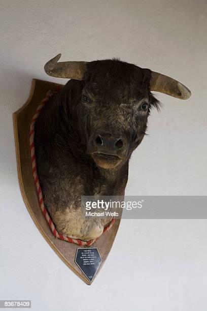 A bull's head trophy
