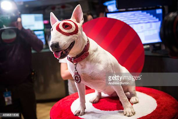 Bullseye an English Bull Terrier and a mascot for Target visits the floor of the New York Stock Exchange on the morning of November 28 2014 in New...