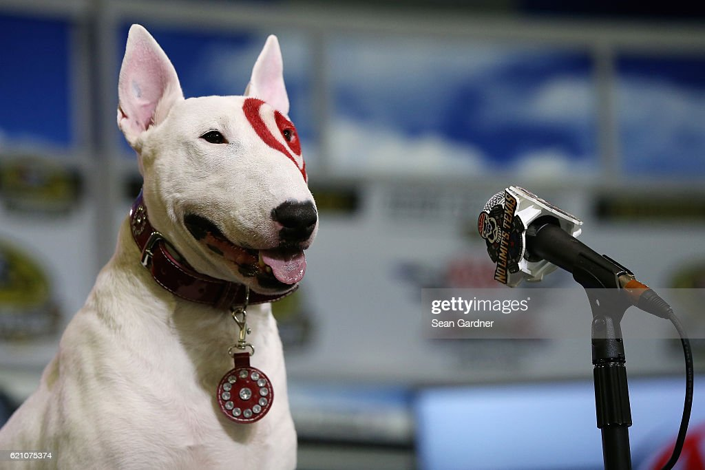 Bullseye, the Target mascot, attends a press conference prior to practice for the NASCAR Sprint Cup Series AAA Texas 500 at Texas Motor Speedway on November 4, 2016 in Fort Worth, Texas.