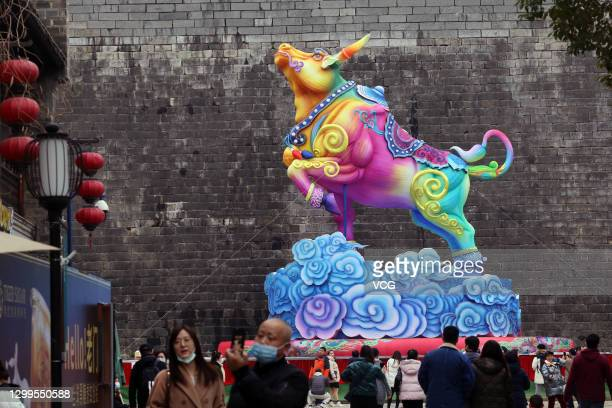 Bull-shaped lantern is on display before the Chinese New Year, the Year of the Ox, on January 31, 2021 in Nanjing, Jiangsu Province of China.