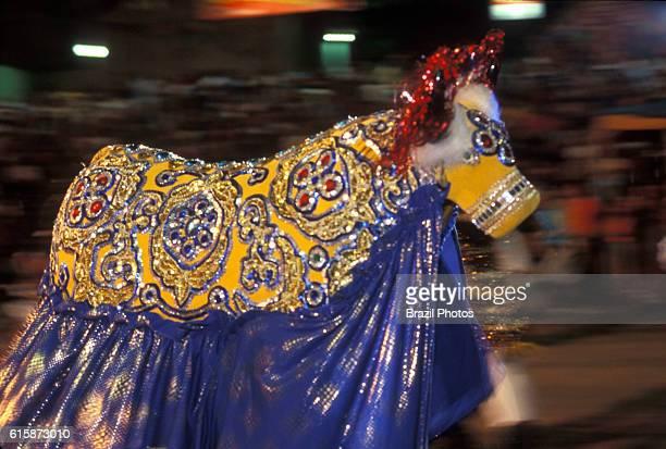 Bumba-meu-boi, popular party that mix religious elements and ancient fables, a Brazilian folk theatrical tradition - Boi Anjo Mimiso - Sao Luis,...