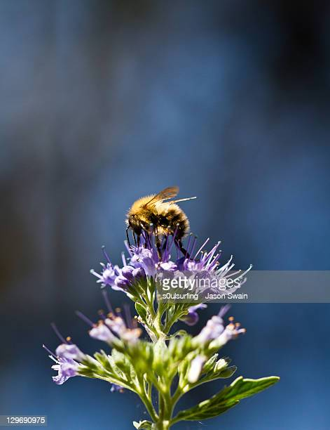 bumble bee - s0ulsurfing stock pictures, royalty-free photos & images