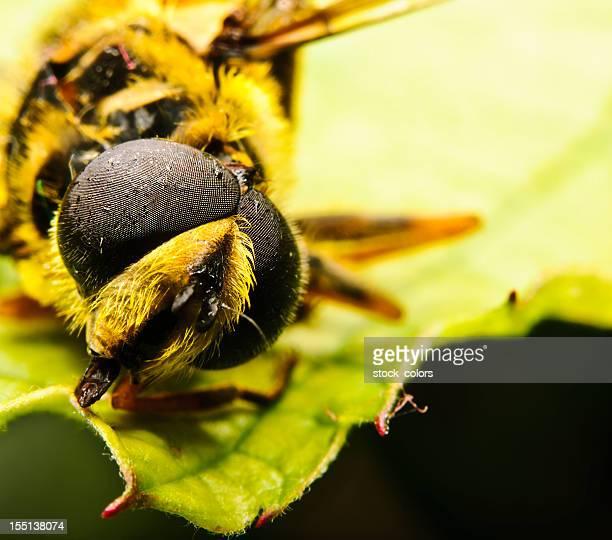 bumble-bee head