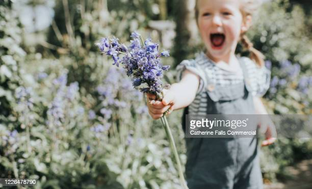 bunch of bluebells - giving stock pictures, royalty-free photos & images