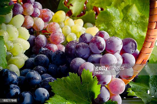 bunch of different types of fresh grapes - druif stockfoto's en -beelden