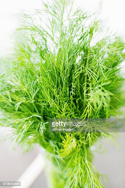 Bunch of dill in glass, close-up
