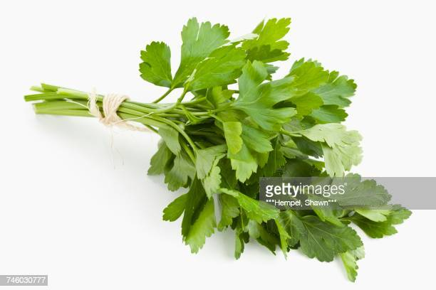 a bunch of flat-leaf parsley - flat leaf parsley stock photos and pictures